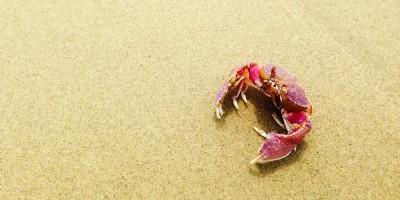 Hewan Laut Terbukti Mampu Kurangi Partikel Virus